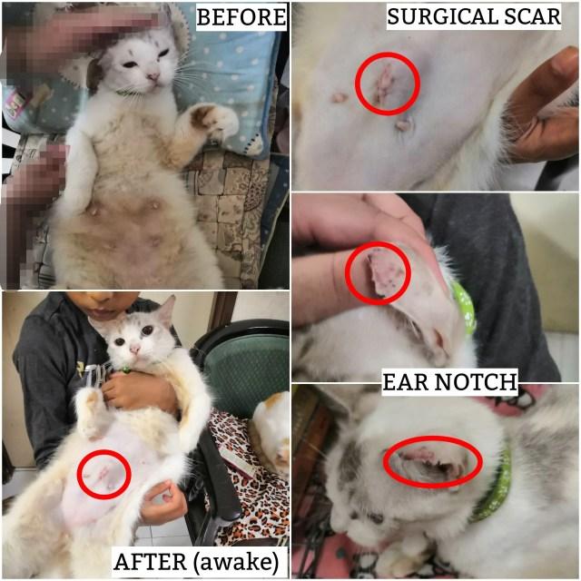 Neutering Aid For 1 Cat In Kuantan (Mohd Lutri Ikram Bin Mohd Hussin's)