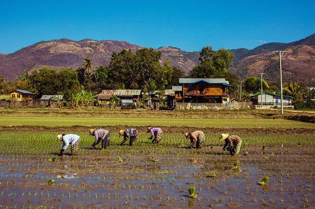 rural-myanmar