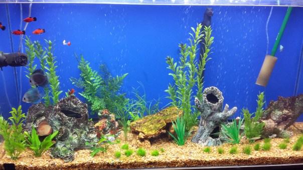 Animated Fish Tank Wallpaper There Are Plenty Of Fish In The Sea I Mean Aquarium