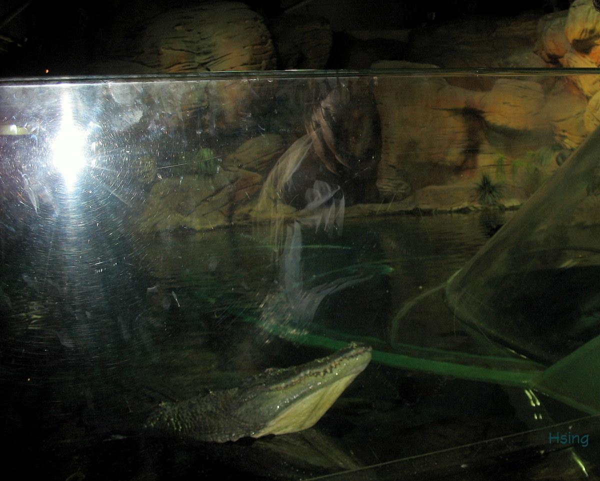 上海海洋水族館 Shanghai Ocean Aquarium   myarchetypes