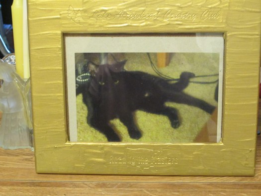 The picture frame with the photograph of Irina the cat might look nice sitting on a shelf