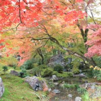 Hogon-in temple of Arashiyama, The travel for red leaves in Kyoto, No.2