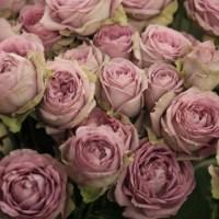Splendid Bouquet of Roses List l-o, International Roses & Gardening Show 2013, #17