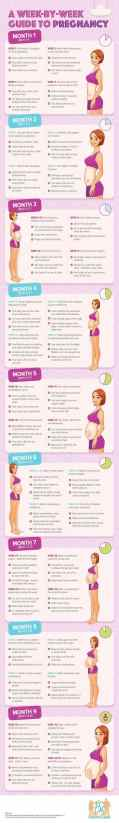 Best Infographic About Pregnancy 57