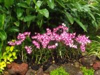 Orchids | my backyard nature