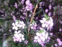 flower | my backyard nature