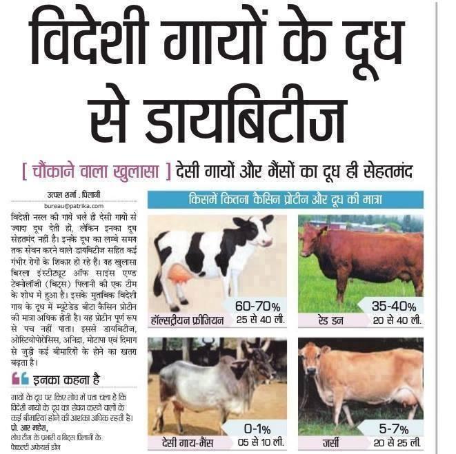 गाय(cow)