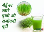गेहूँ का ज्वारे : पृथ्वी की संजीवनी बूटी |Health Benefits Of Wheat Grass