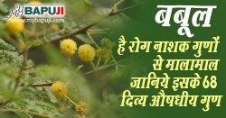 Babool ke Fayde in Hindi बबूल के औषधीय गुण फायदे और नुकसान