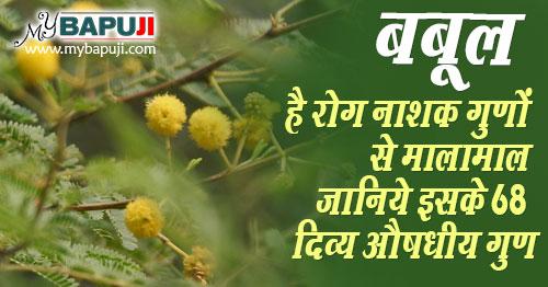 babool ke fayde in hindi