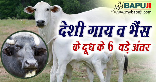 difference between cow milk and buffalo milk