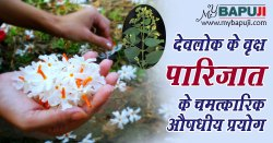 पारिजात के अनोखे फायदे और उपयोग | Parijaat (Haar shingar) Benefits in Hindi