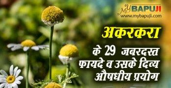 Akarkara ke Fayde(Benefits) in hindi