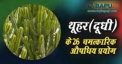 थूहर के गुण व 26 चमत्कारिक औषधिय प्रयोग | Thuhar(Dudhi) ke Fayde in Hindi