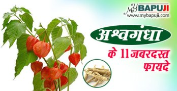 Ashwagandha ke Fayde in hindi
