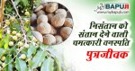 पुत्रजीवक के फायदे गुण उपयोग और नुकसान | Putrajeevak Benefits and Side Effects in Hindi