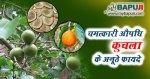चमत्कारी औषधि कुचला के अनूठे फायदे | Kuchla Ke Fayde Aur Nuksan Hindi Mein