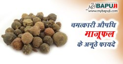 माजूफल के फायदे गुण उपयोग और नुकसान | Majuphal Uses, Benefits, Cures, Side Effects