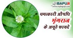 भृंगराज के फायदे ,औषधीय गुण और उपयोग | Bhringraj Benefits and Side Effects