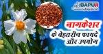 नागकेशर के फायदे ,गुण ,उपयोग और नुकसान | Nagkesar ke Fayde aur Nuksan Hindi mein