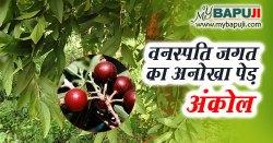 Ankol in Hindi अंकोल के फायदे गुण उपयोग और दुष्प्रभाव