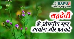 Sahadevi in Hindi सहदेवी के उपयोग गुण फायदे और दुष्प्रभाव