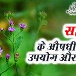 Sahadevi ke fayde aur nuksan in hindi