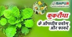 कुकरौंधा के फायदे ,गुण ,उपयोग और दुष्प्रभाव | Kukundar ke Fayde in Hindi