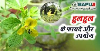 hulhul ke fayde aur nuksan in hindi