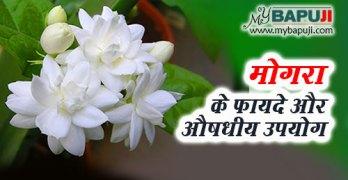 Mogra ke fayde aur nuksan in hindi