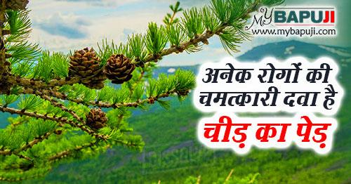 cheed ped ke fayde aur nuksan in hindi