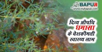 dhamasa ke fayde gun upyog aur nuksan in hindi