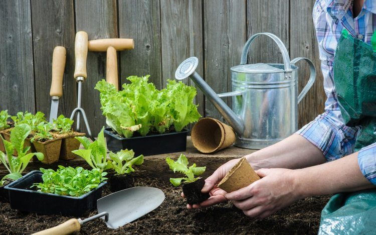 Tips On How To Grow A Vegetable Garden In Dubai Mybayut