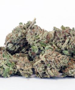 Red Congo Sativa Cannabis