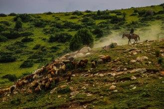 kirgisischer Hirte zu Pferd
