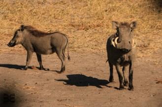 Wildlife Mudumo N. P.