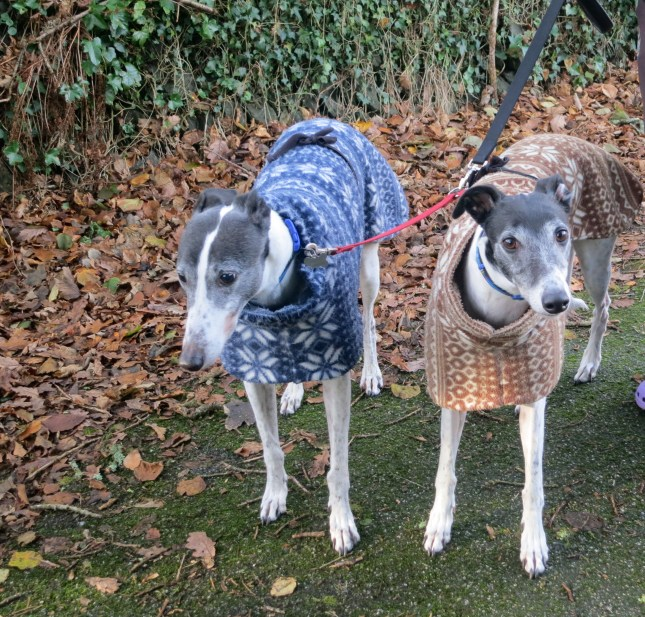 Rather lovely dogs in their equally lovely knitted jackets