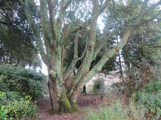 Beautiful lichen covered tree