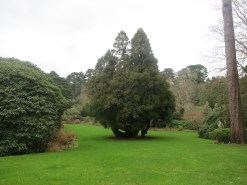 The big lawn and tree
