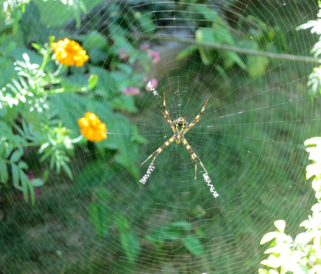 Spider kiss in Nepal