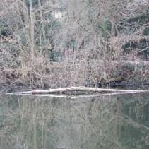 Fallen tree closer still
