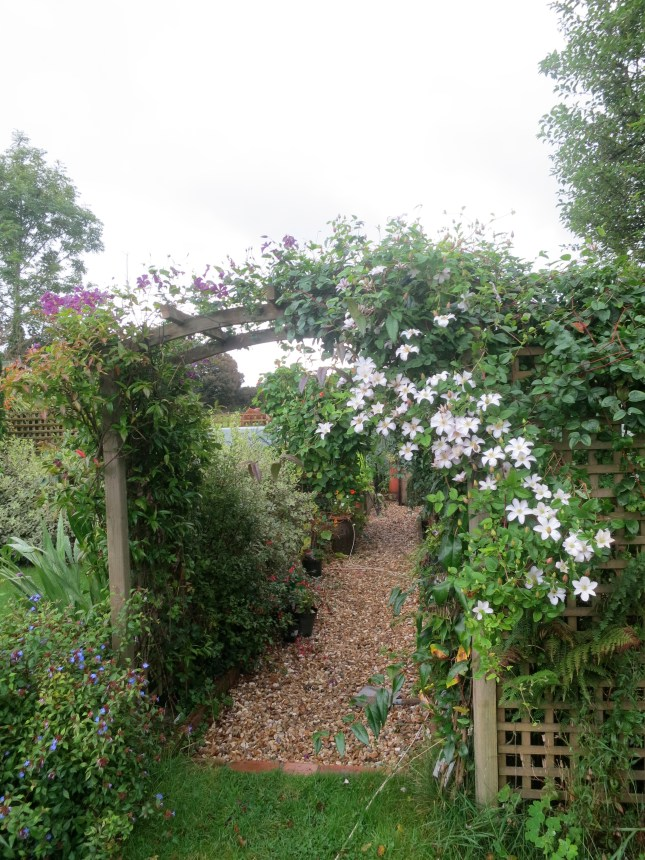 Clematis over the arch