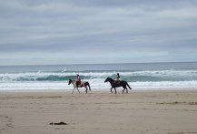 Horses and a surfer