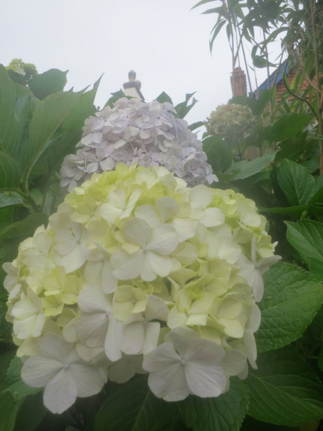 Hydrangea in the mist