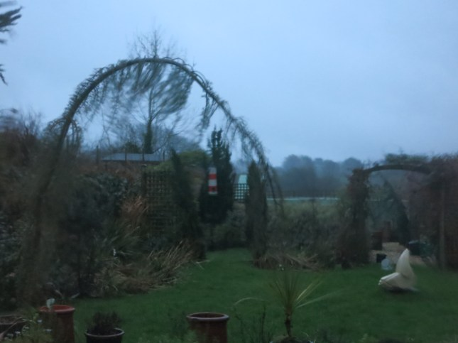 Tonight's storm blowing all our conifers about