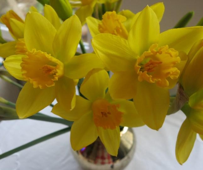 Valentine's Day Daffodils