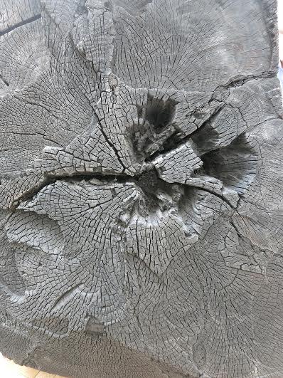 Charred sequoia