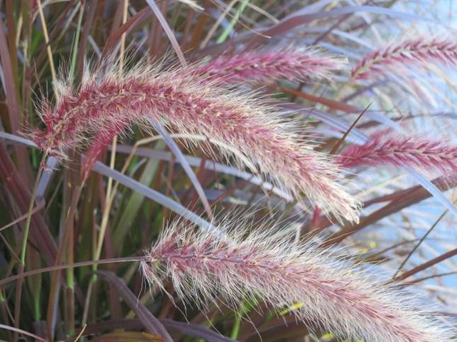 Fraying grasses