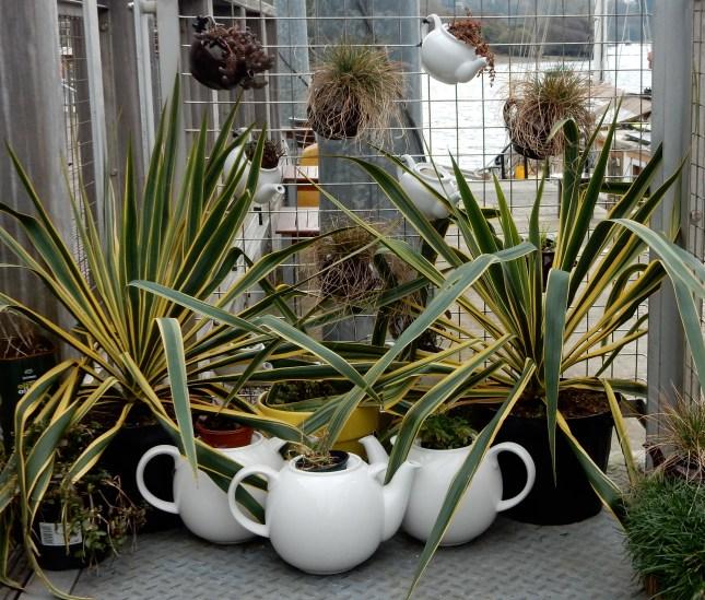 Teapot garden