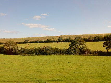 Fields and hedges and cows